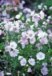 MALVA moschata  'Appleblossom' Portion(en)