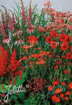 Perennial Mix red colors, high, 80-140 cm Portion(s)