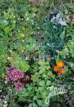 Basic Herbal Plant Mix for Green Roofs Portion(s)