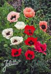 PAPAVER Orientale-Hybr.  Deluxe Mixture Portion(s)