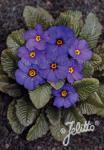 PRIMULA Wanda-Hybr. (Orig. Niederlenz) 'Wanda Blue Shades' Portion(s)