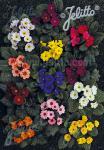 PRIMULA Wanda-Hybr. (Orig. Niederlenz) 'Wanda Mixed Colors' Portion(s)