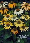 ECHINACEA Purpurea-Hybr.  'Mellow Yellows' Portion(en)