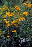 TAGETES lucida   Portion(en)