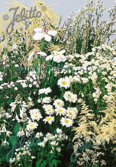 Perennial Mix white colors, low, up to 30 cm Portion(s)
