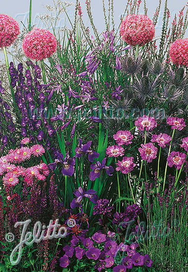 Perennial Mix blue colors, low, up to 30 cm Portion(s)