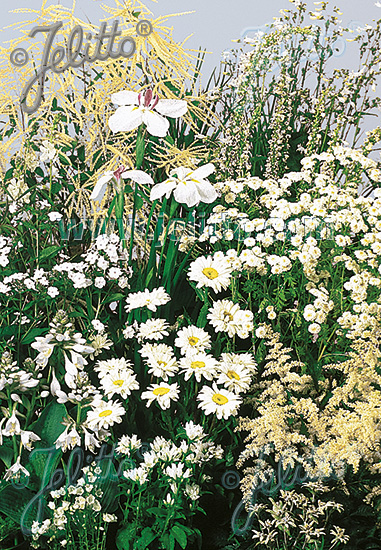Perennial Mix white colors, medium, 30-80 cm Portion(s)