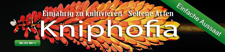 SliderKniphofia