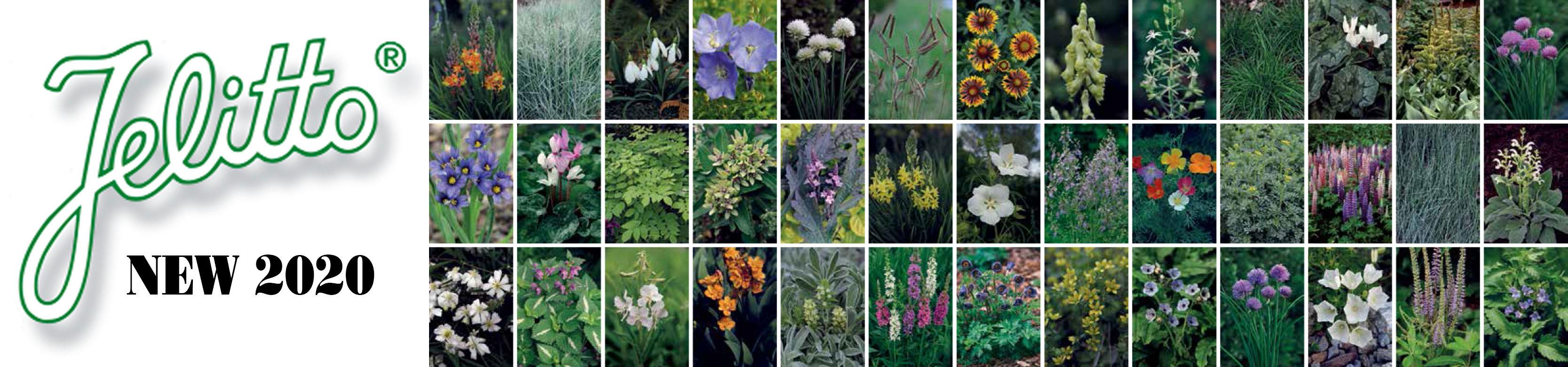 Jelitto Perennial Seed Staudensamen Graines De Plantes Vivaces